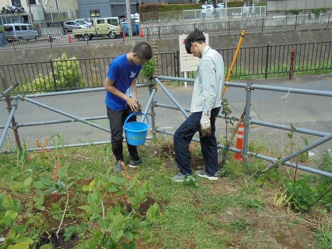2学生がモッコウバラの苗木を植えました