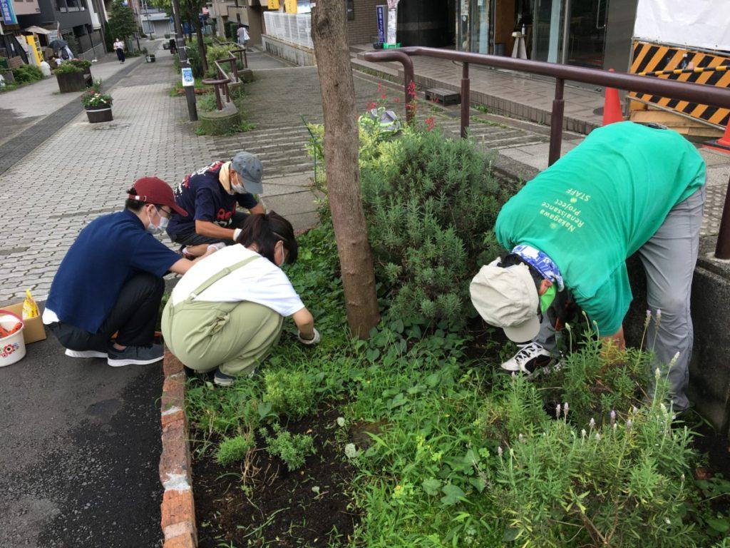 7月28日ドクダミが生い茂ったハーブ花壇の草取り