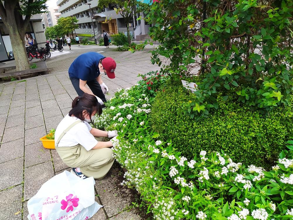 7月28日シンボル花壇の雑草取り