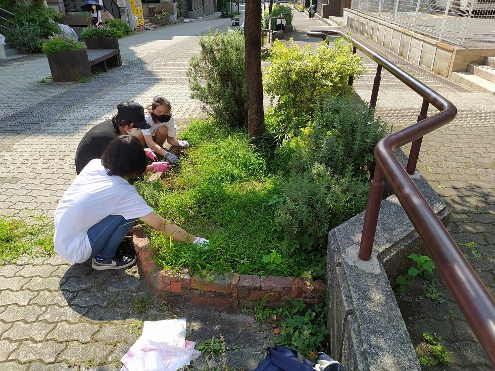 8月4日ハーブ花壇の草取り