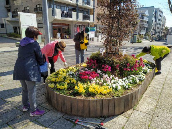 シンボル花壇の花殻摘み