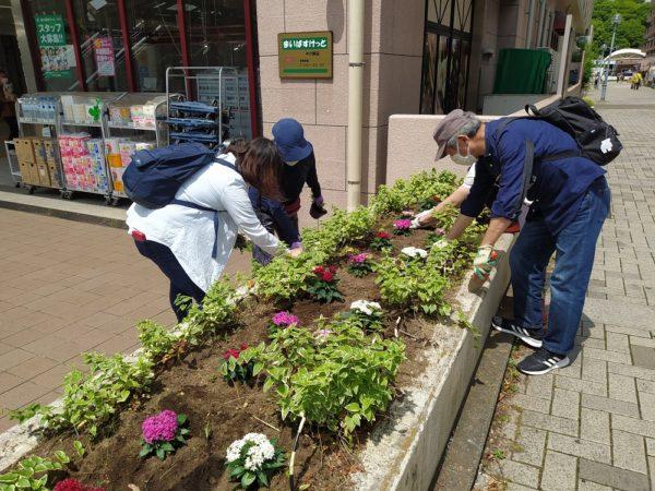 駅前花壇の花植替え