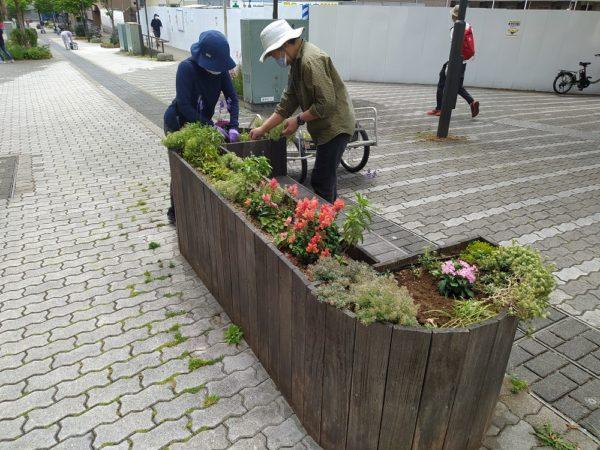 ベンチ花壇の植替え