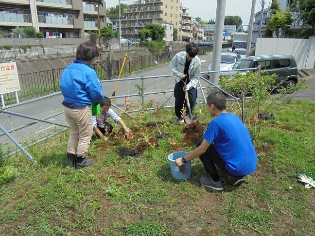 1ブルーベリー苗木の植え付け
