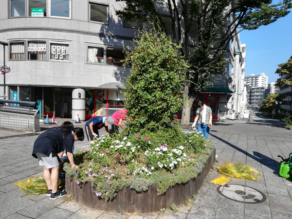 シンボル花壇の摘花作業